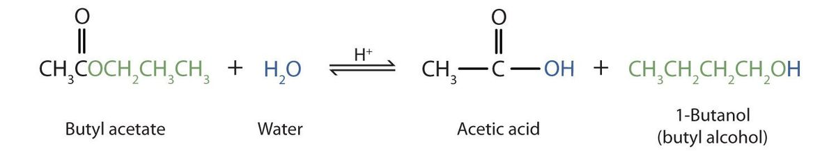 15.9: Hydrolysis of Esters - Chemistry LibreTexts