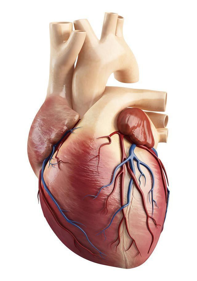 45 best Cardiovascular Technologist. images on Pinterest ...
