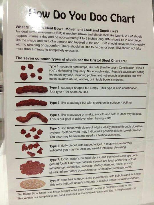 Fiber Digestion  Digestive Diagrams    Acupressure