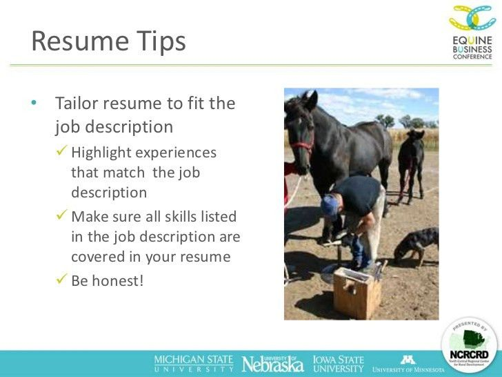 Finding Your Dream Job in the US Horse Industry