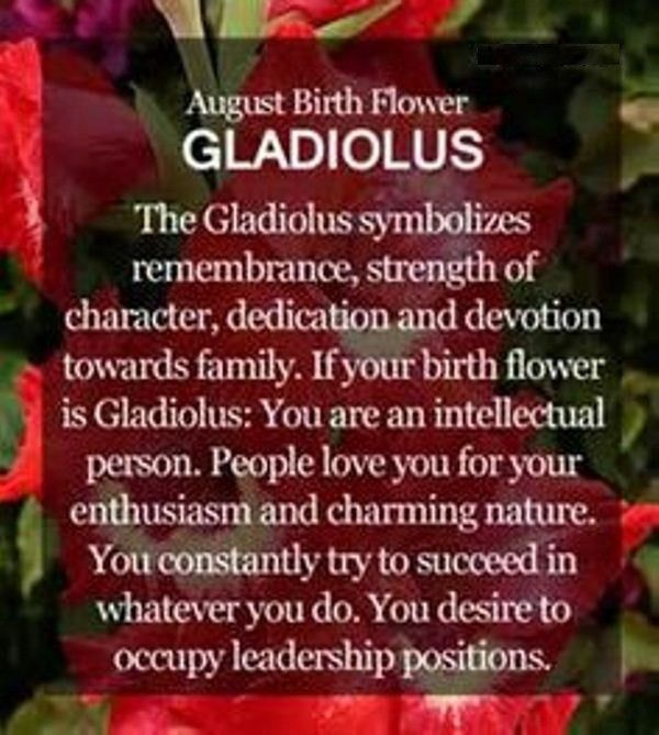 August Birth Flower Meaning – Free Design and Templates