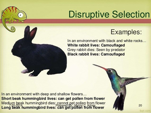 Ecological Genetics: Adaptation and Natural Selection