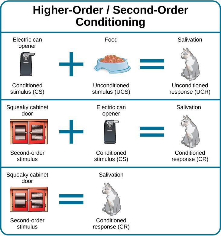 Classical Conditioning | Introduction to Psychology