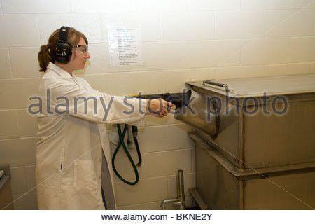 Forensic expert firing a gun into a ballistic water tank. Bullets ...