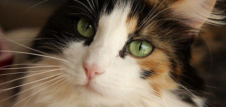 Lost Pet | Best Friends Animal Society