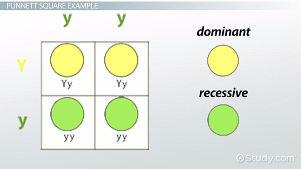 Multiple Alleles: Definition & Example - Video & Lesson Transcript ...