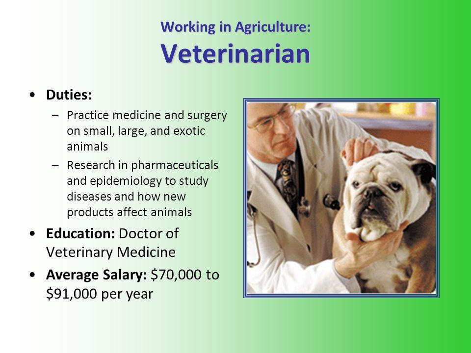 veterinary technicians at vetmed assisting with surgery ...
