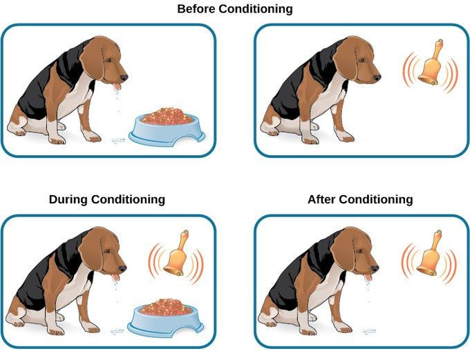 Classical Conditioning | Boundless Psychology