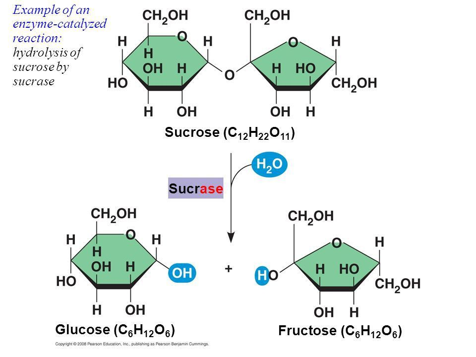 Enzymes!. Enzymes speed up the rate of metabolic reactions by ...