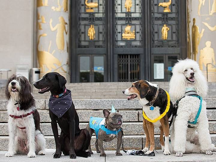 Pups on the Plaza, with Dog Parker and Slobbr | Brooklyn Public ...