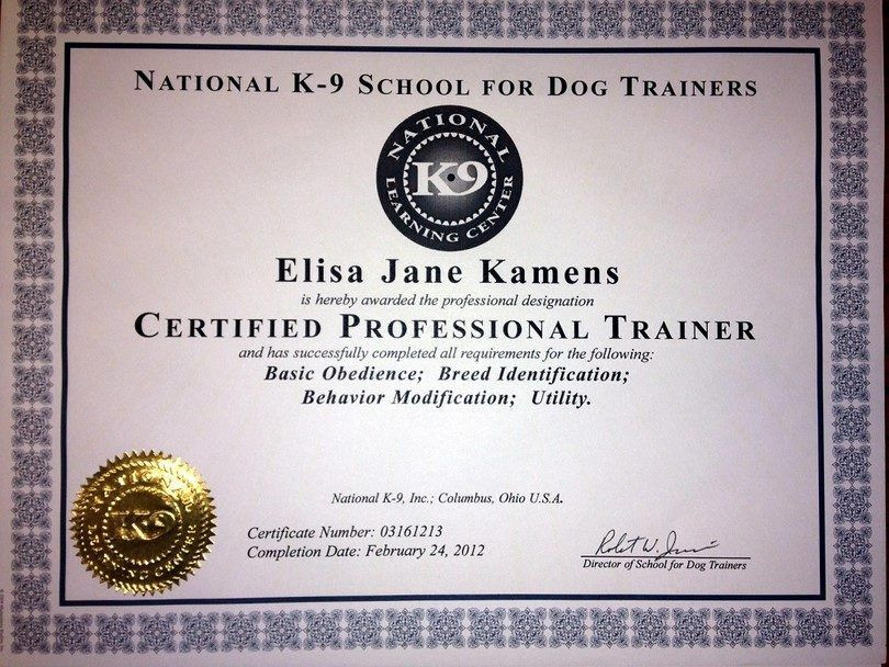 How to Become A Dog Trainer: Getting A Career That Satisfies Your ...
