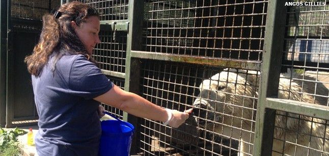 Planit : Job Profiles : Zoo Keeper Work with Animals