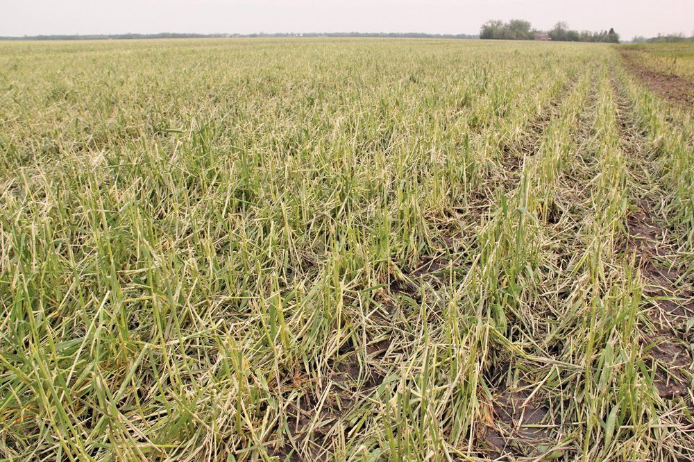 MASC hail insurance practices questioned by local farmers