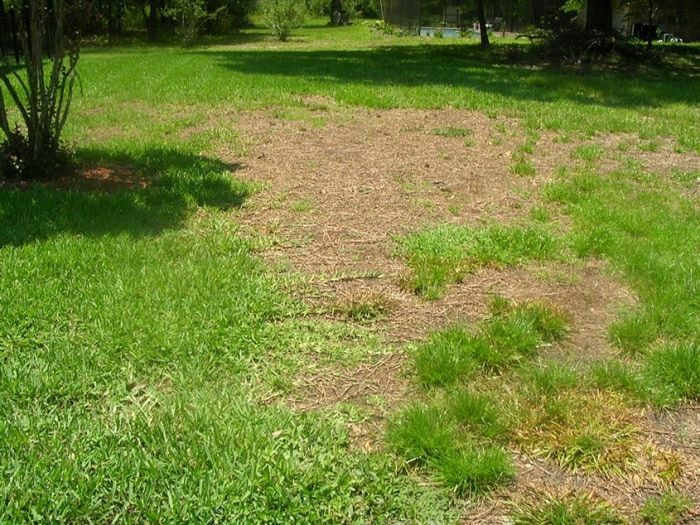Homeowners Reveal Lawn Care Scams and Shoddy Service | Angie's List