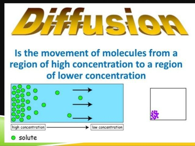 Diffusion Osmosis and Active Transport