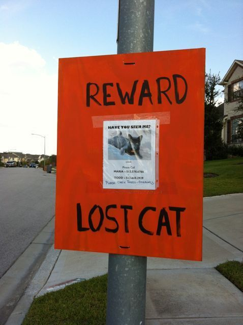Creating an Eye-Catching Missing Poster: What You Need to Know ...