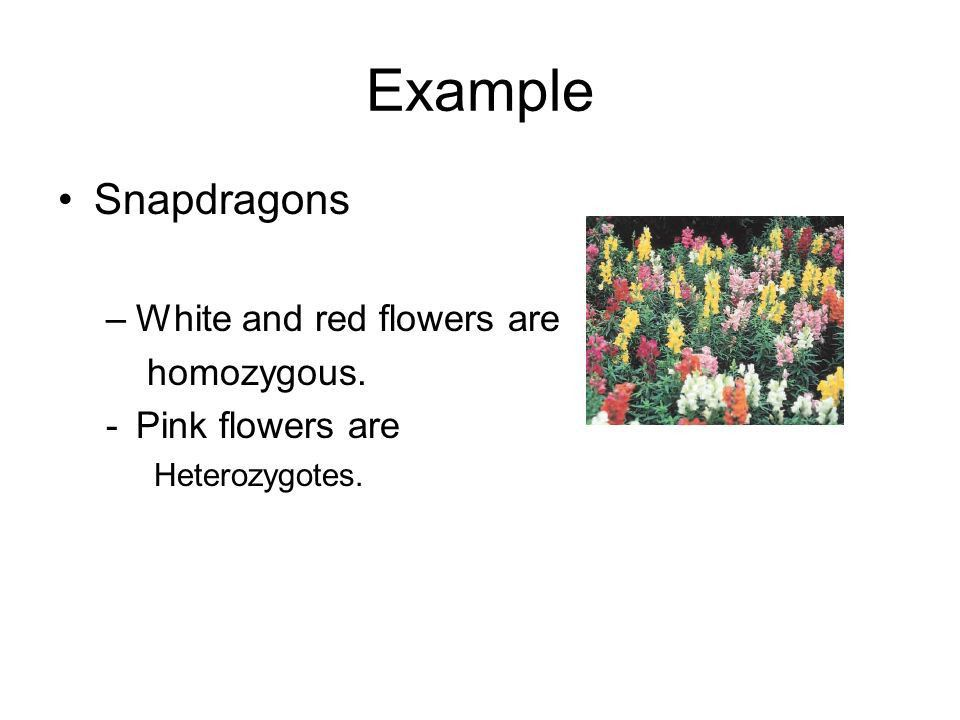 Genes and Heredity. - ppt download