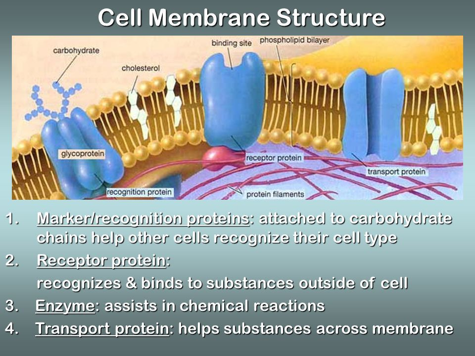 Notes on Chapter 6.2 & 6.3 Movement through the Membrane. - ppt ...