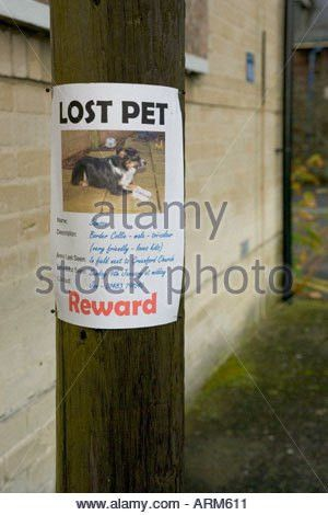 Lost Pet poster of a dog attached to tree Stock Photo, Royalty ...