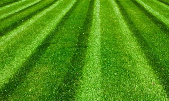 Lawn and Garden Care - A Complete Lawn Care | Groupon