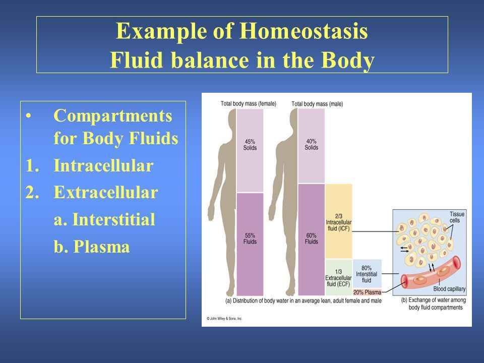 An Introduction to the Human Body - ppt download