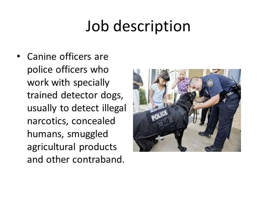 K9 officer By : Katlyn walker. Job description Canine officers are ...
