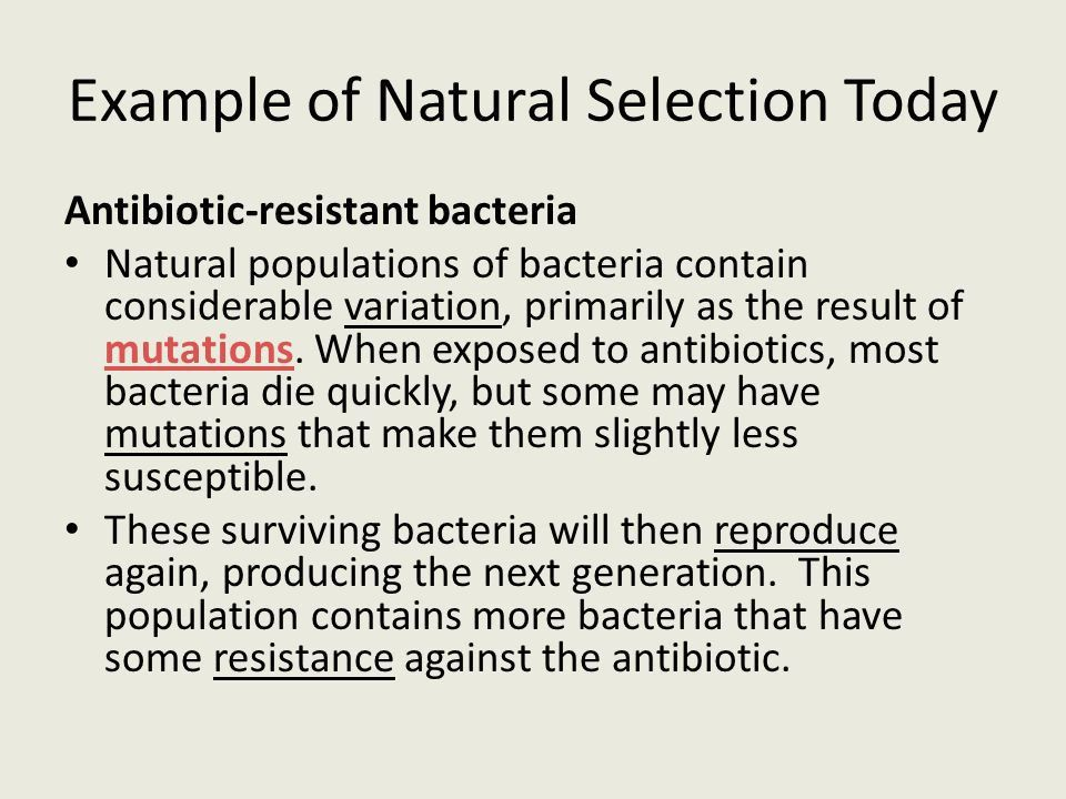 Chapter 10 Notes, Part II The Theory of Natural Selection. - ppt ...