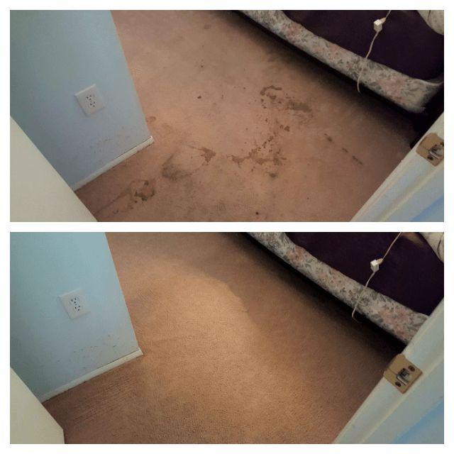 Carpet Cleaning Companies Sarasota FL, Carpet Cleaners Sarasota Fl