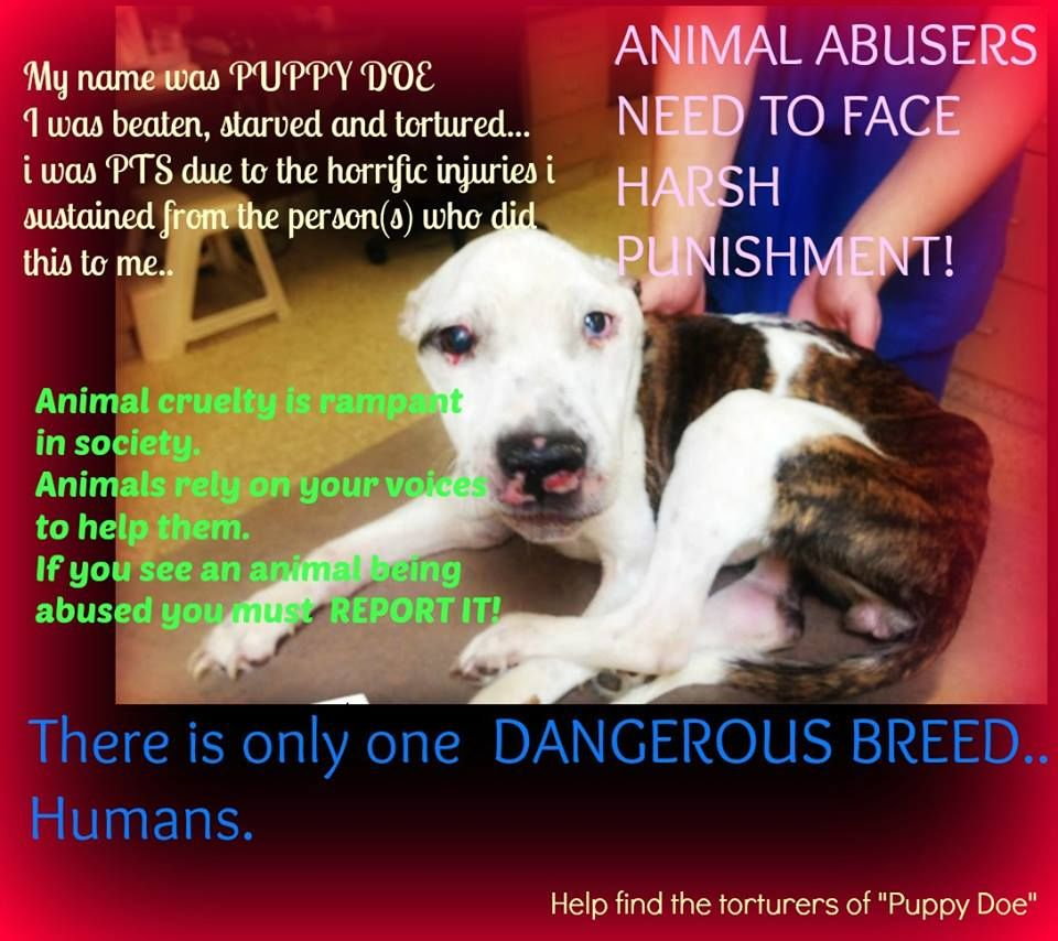 Image result for animals need my help