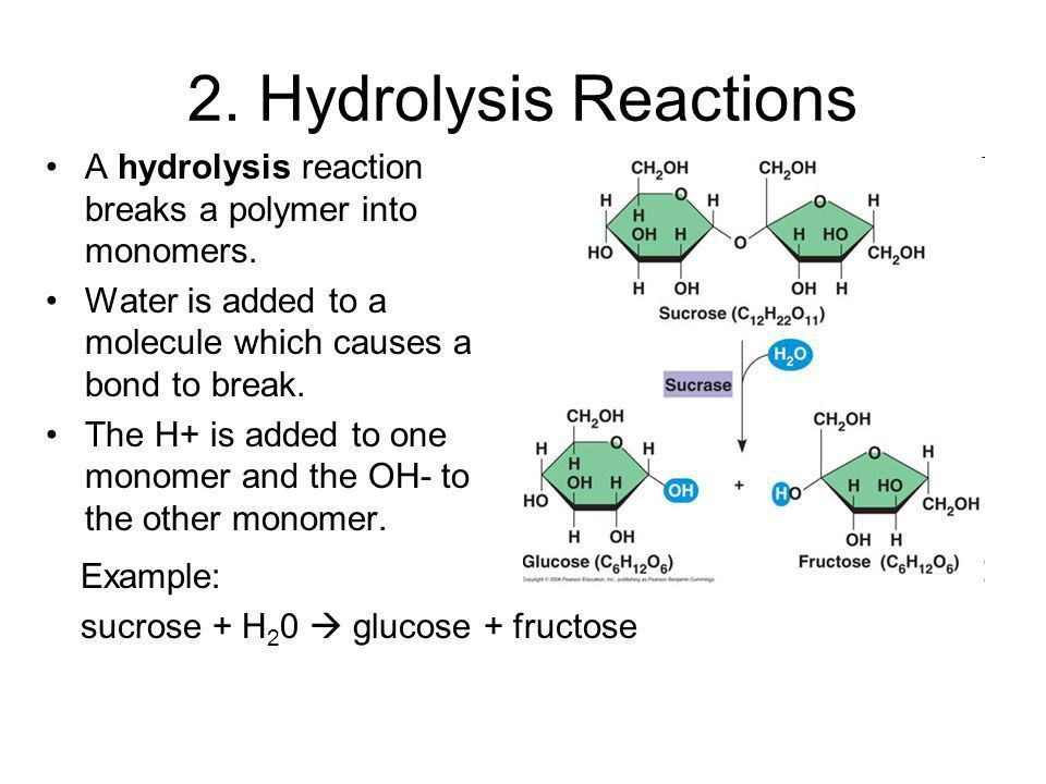 Biochemical Reactions that Make and Break Molecules. - ppt download
