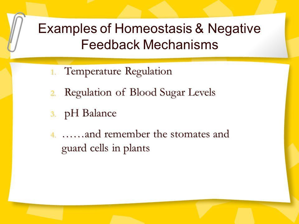 Topic 12: The Human Body, Homeostasis, & Feedback Mechanisms - ppt ...