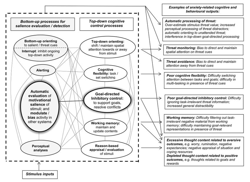 Integrative framework of bottom-up and top-down cognitive ...