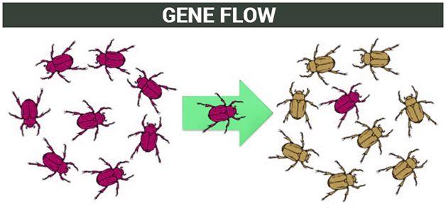 Gene Flow | Theories of Evolution | Factors Affecting Gene Flow
