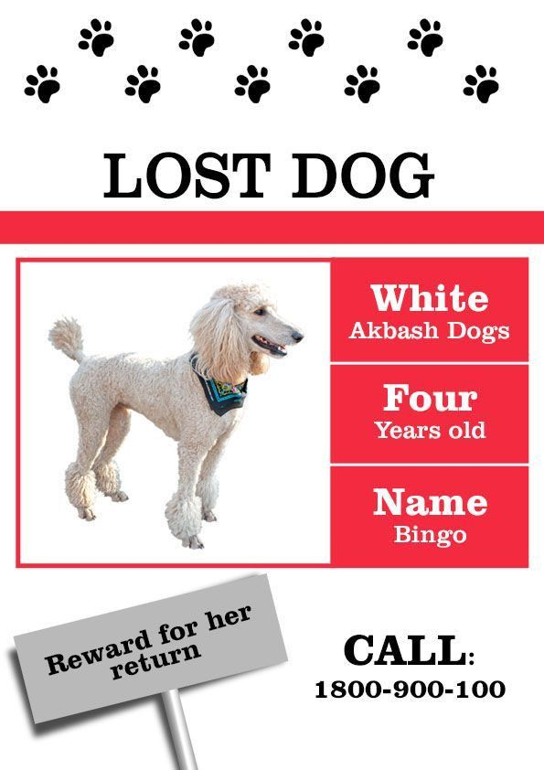 Lost Dog Sign Template - Contegri.com