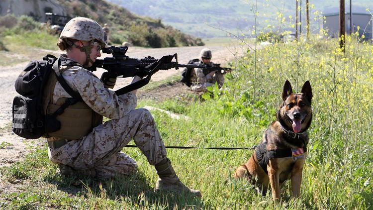 USMC Enlisted Job Descriptions: Working Dog Handler