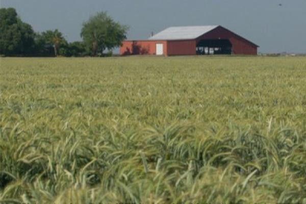 Crop Insurance Set to Expand Despite Growing Fraud Worries
