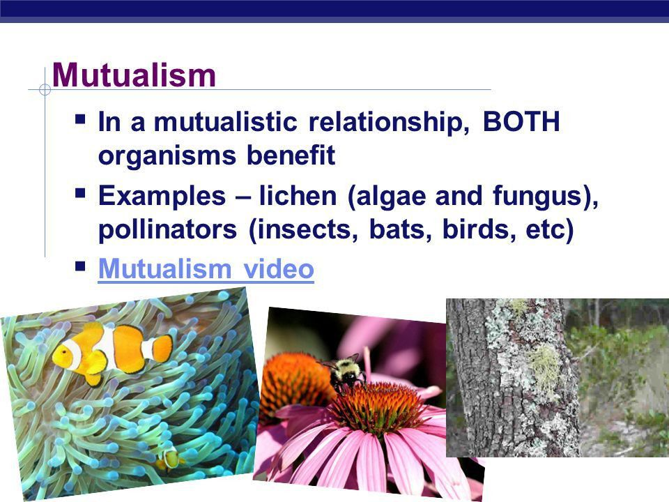AP Biology  video video AP Biology Community Ecology. - ppt download