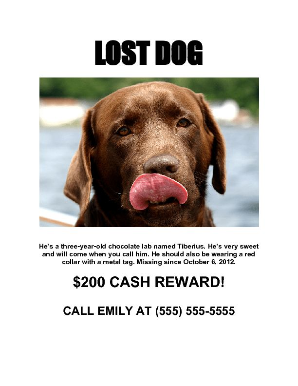 Lost dog poster maker   speciesworld.com