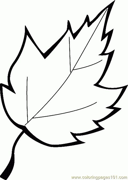 Leaf - Coloring Pages | school | Pinterest | Leaves, Craft and ...