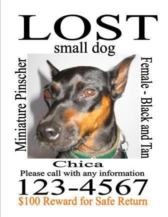 Missing Dog Flyer Template. good lost ad. pets flyer templates ...