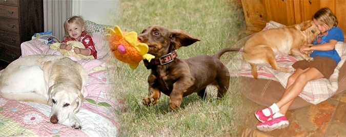 Florida Dog Trainer, Martin Deeley - Orlando FL