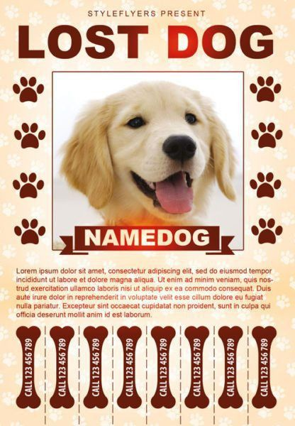 Lost Pet Flyer Maker, find free flyer templates for word 10 ...