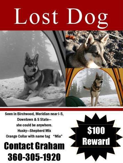 Lost Dog in Bellingham