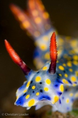 106 best Future Marine Biologist images on Pinterest | Marine ...