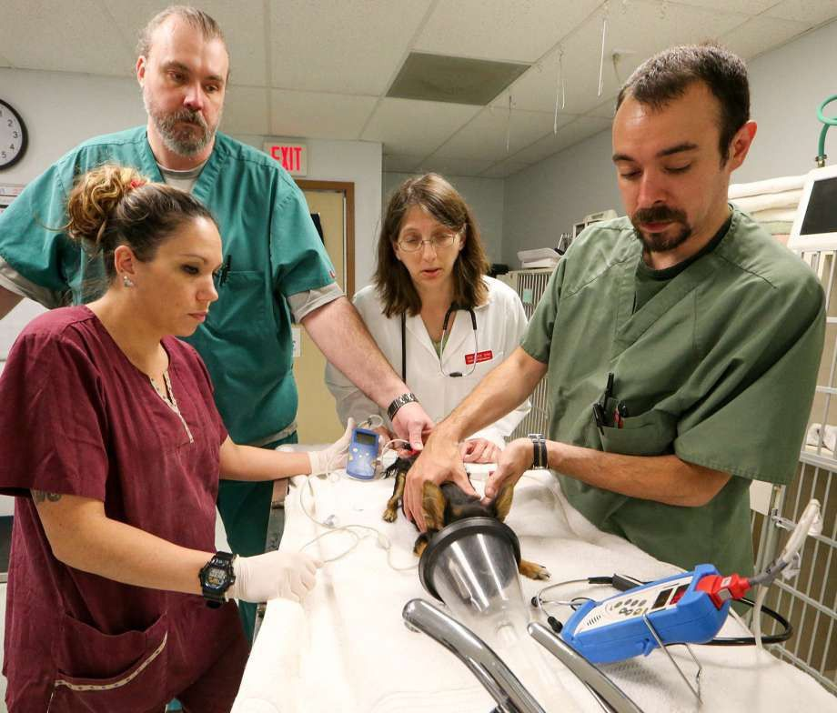 Animal Emergency Room provides medical care and a little loving to ...
