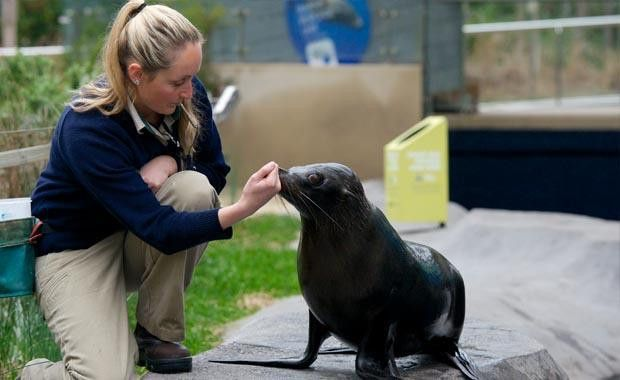 Becoming a Zoo Keeper | Zoos Victoria