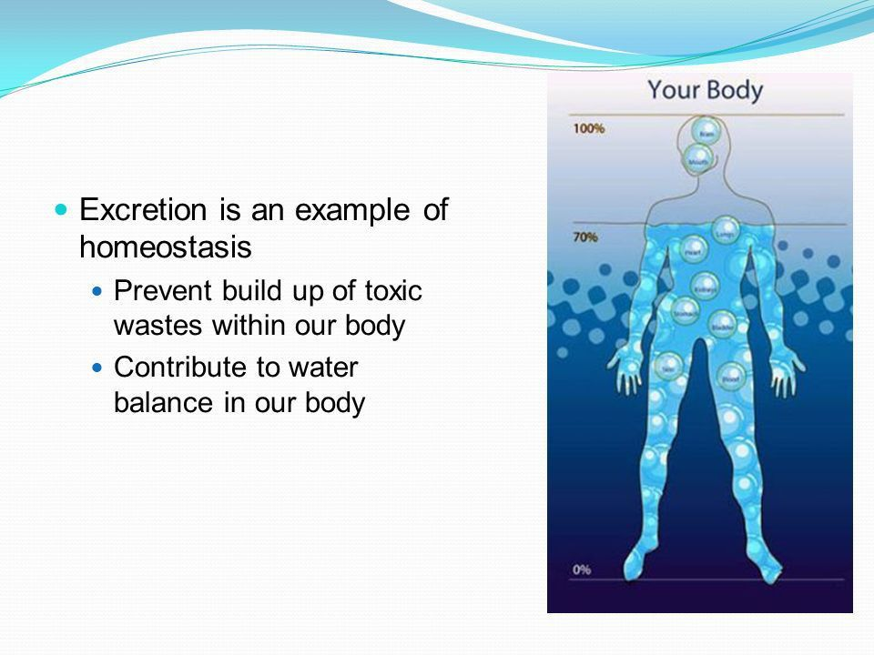 Excretion removal of metabolic waste Protein and nucleic acid ...