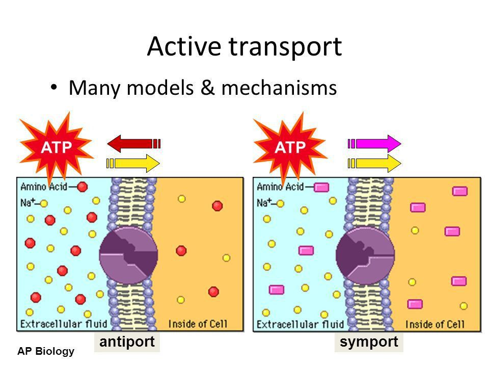AP Biology The Cell Membrane AP Biology Overview Cell membrane ...