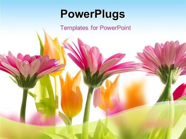 PowerPoint Template: multi color flowers blossom in spring with ...