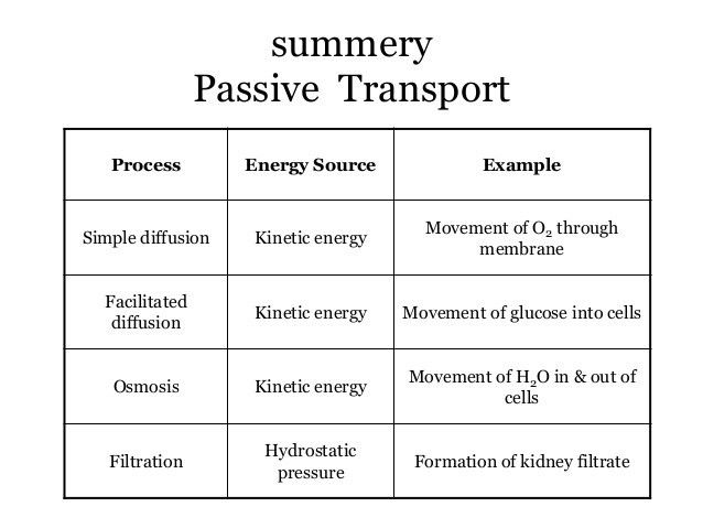 and passive transport of plasma membrane